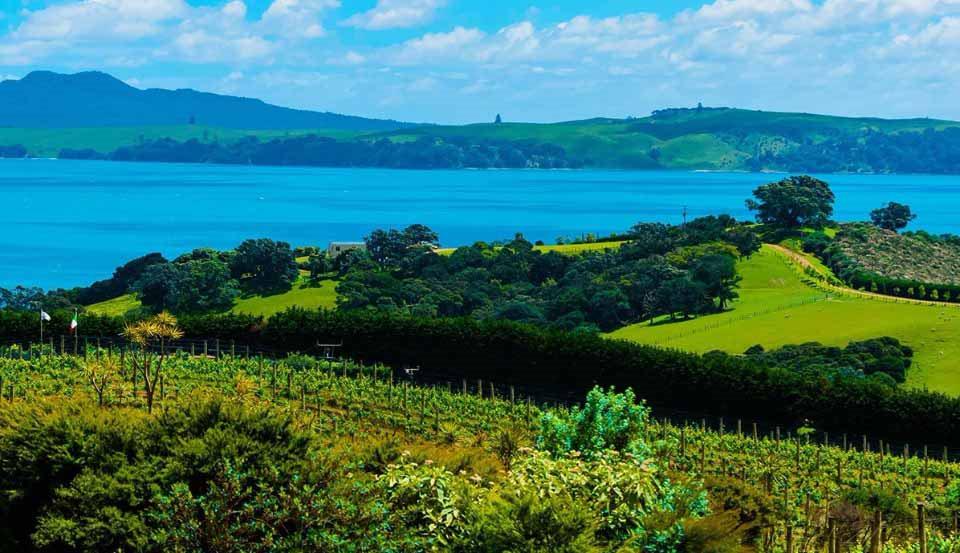 Остров Вайхеке Новая Зеландия